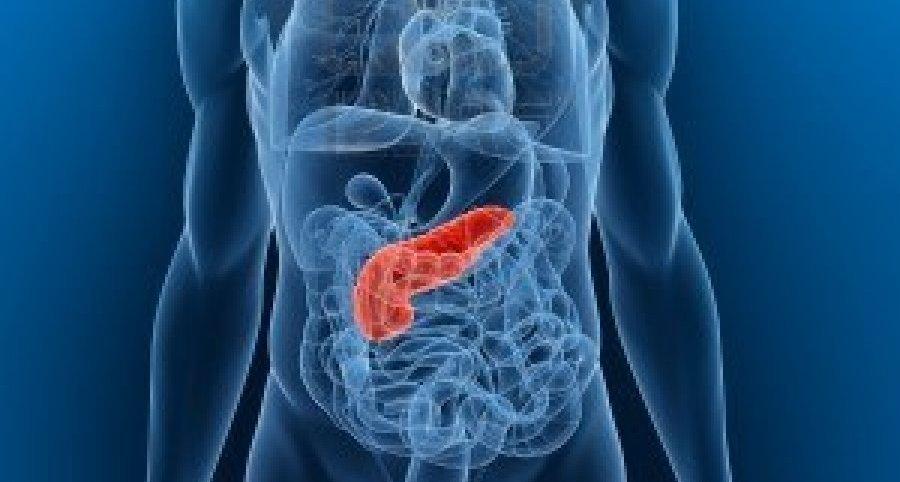 Hasnyálmirigy (pancreas)